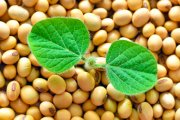 Preço de commodities como soja e milho deve se manter alto e até subir, diz ministra da Agricultura
