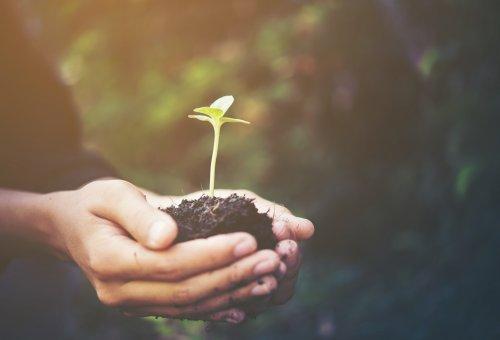 Governo disponibiliza plataforma que ajuda produtor a cumprir Código Florestal