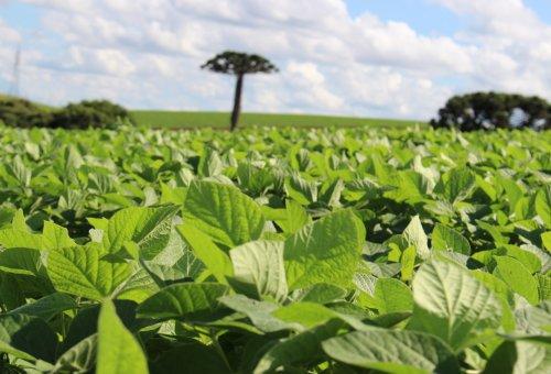 Safra 2018-2019: Os principais desafios e competências para o sucesso da colheita