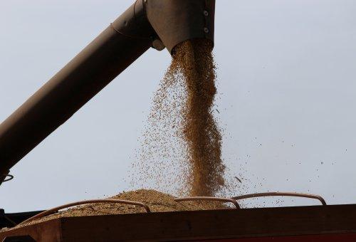 Preços de soja e milho beneficiam produtores no Paraná