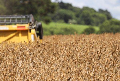 No Sudoeste, agronegócio garante segurança alimentar e gira economia