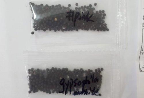 Adapar alerta sobre recebimento de sementes não encomendadas