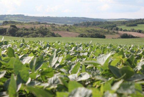 Plantio de soja 18/19 do Paraná tem início mais precoce